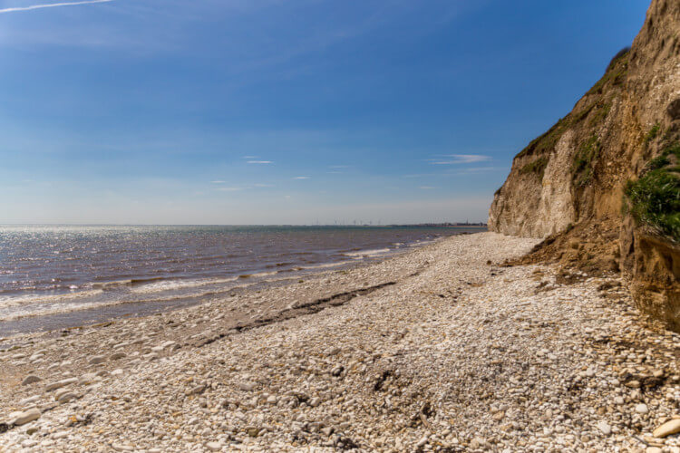 Dog-friendly beaches of Yorkshire
