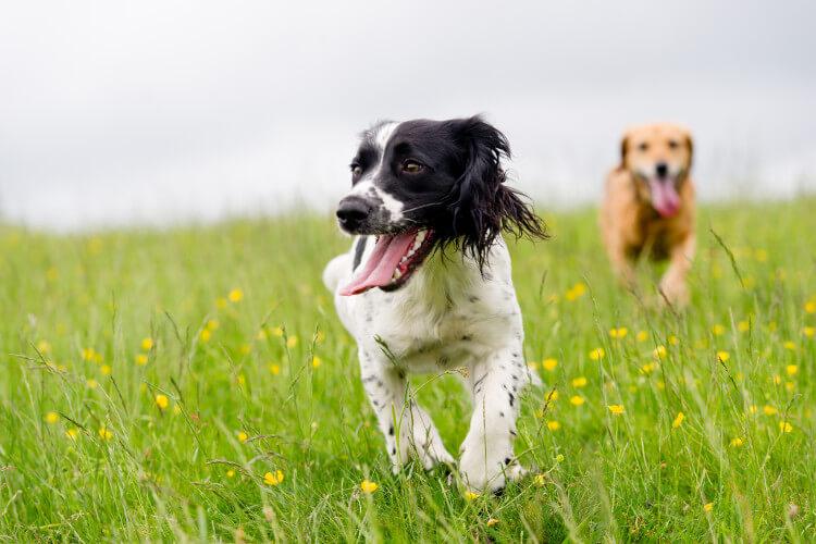 Dog-friendly Yorkshire inspiration